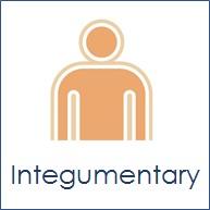 Integumentary