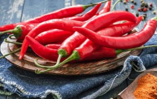 Chilli compound slows lung cancer progression: Study