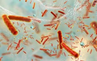 Do gut bacteria affect bowel cancer development?